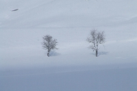 Landscapes_6